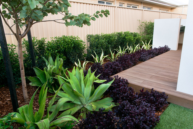Apg display home contemporary garden perth by for Front garden designs perth