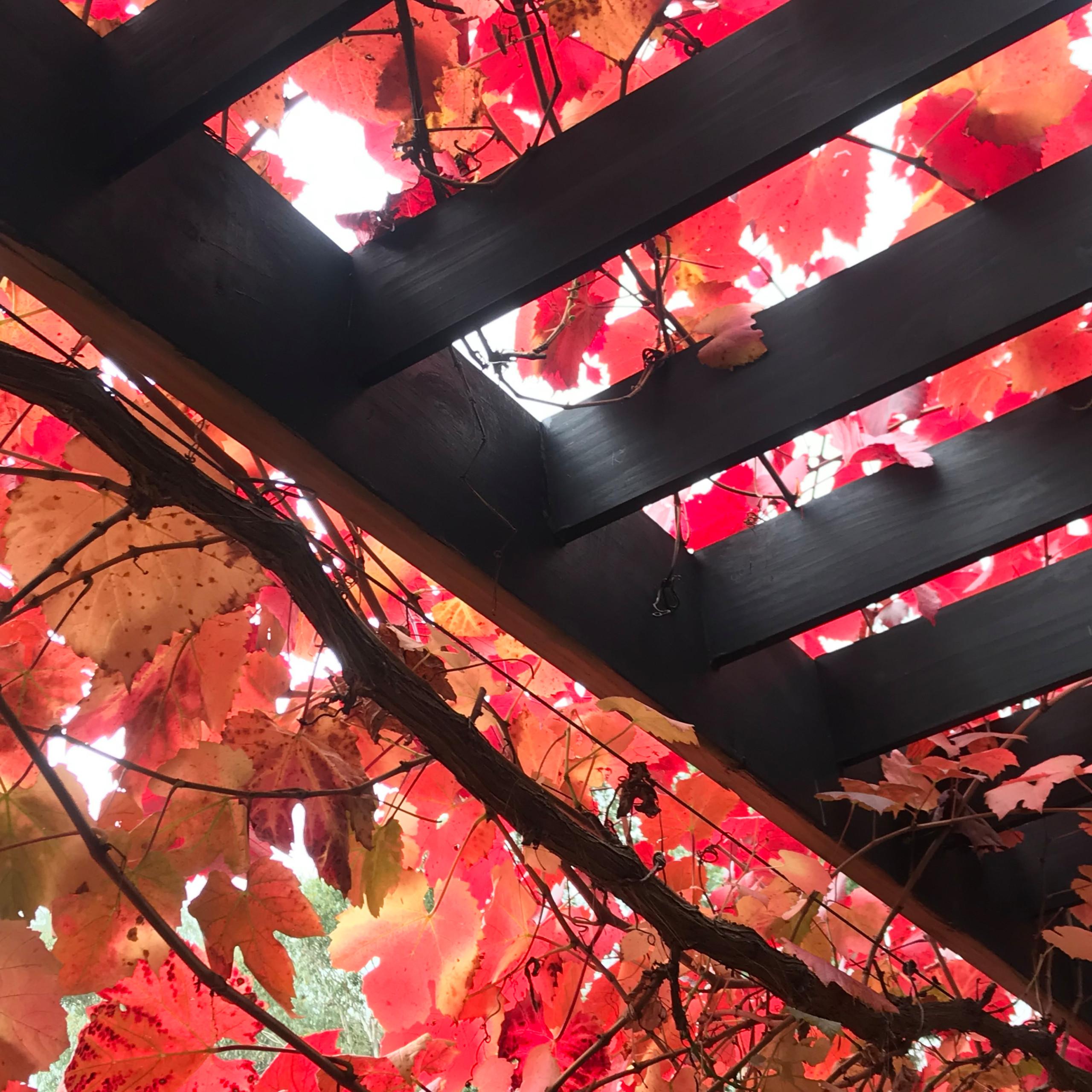 'Arbour House' Autumn Glory