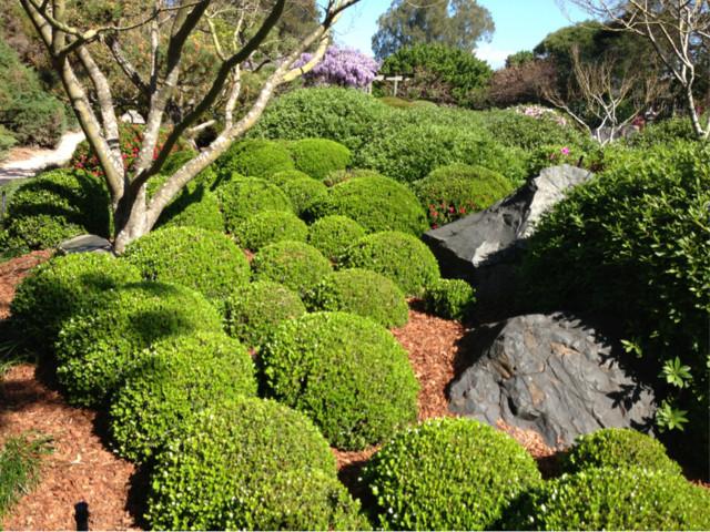 38 Glorious Japanese Garden Ideas: Buxus Spheres