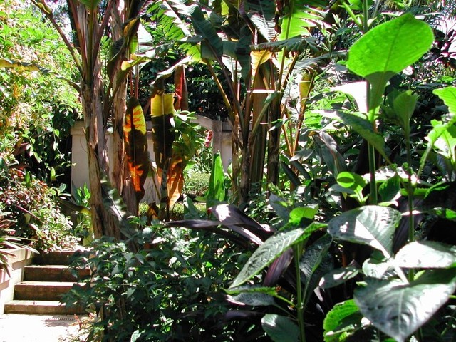 Clever Courtyard Design Tropical Landscape other