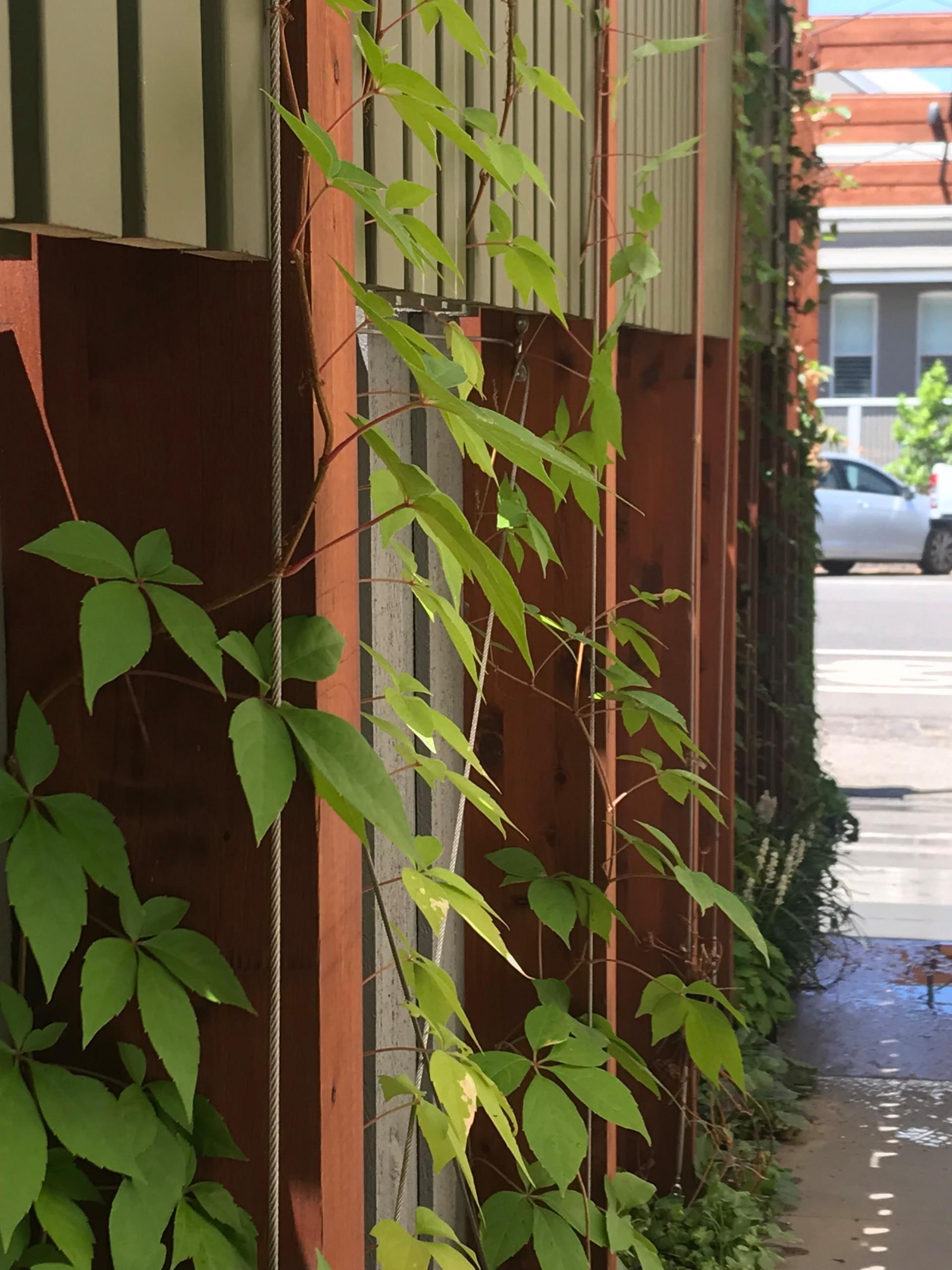 Clifton Hill 'Scarborough' Green Facade Walk