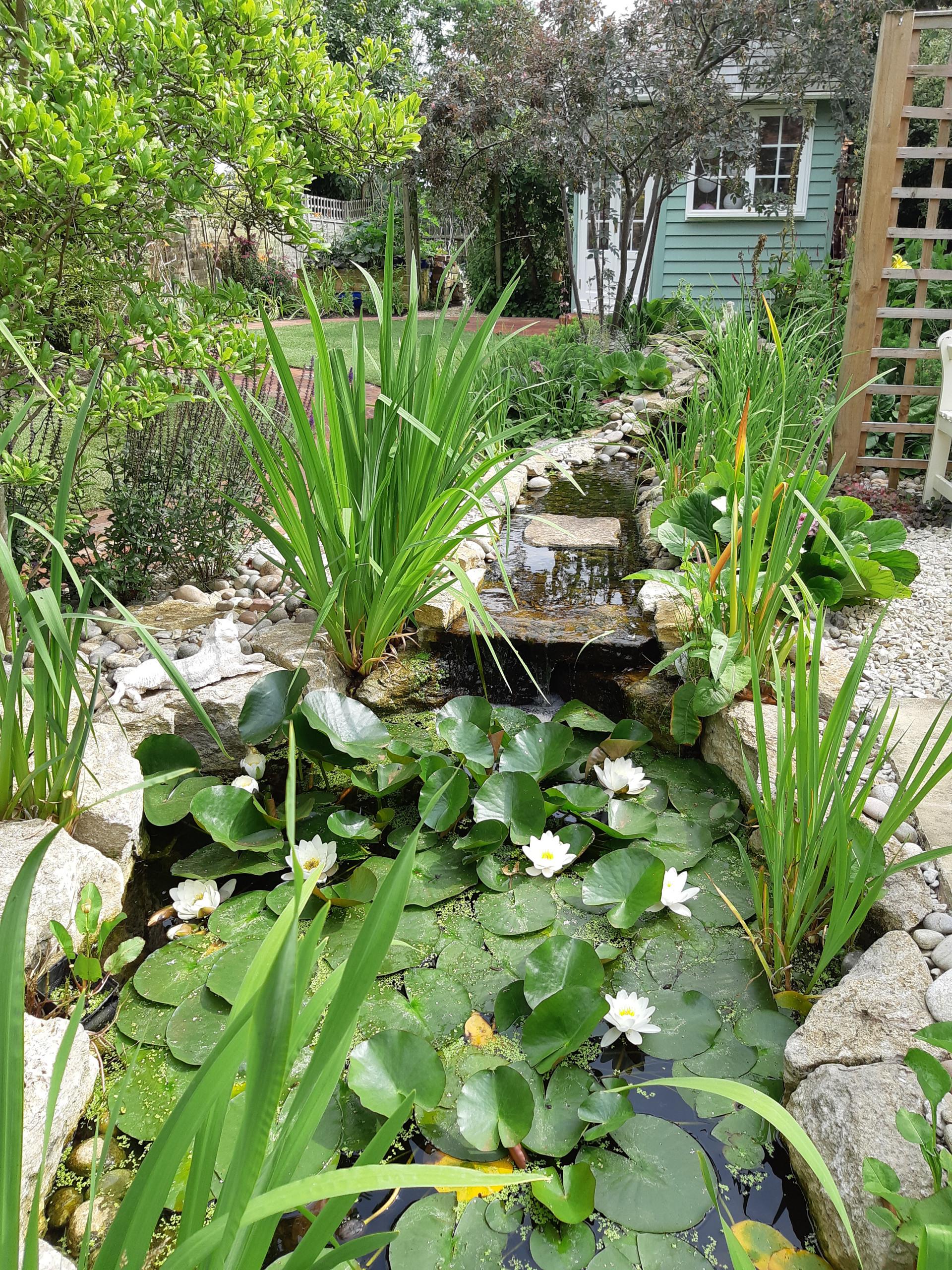 Culham Cottage Garden
