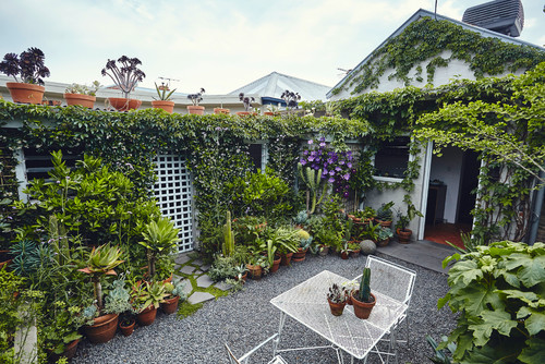 A garden has overtaken nearly all of the lattice fencing in this verdant sitting area.