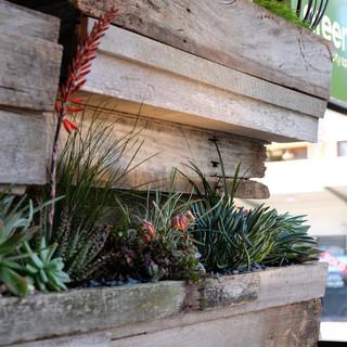 Dead Ringer Shabby Chic Style Garden Sydney By