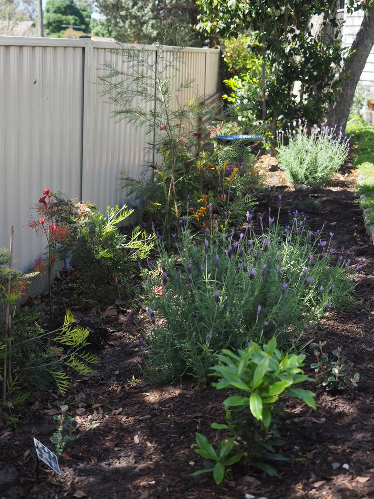 Dream Project edible and native garden - Eclectic ...