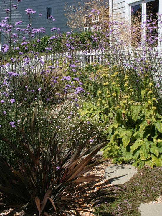 Drought Tolerant Front Garden Home Design Ideas Pictures