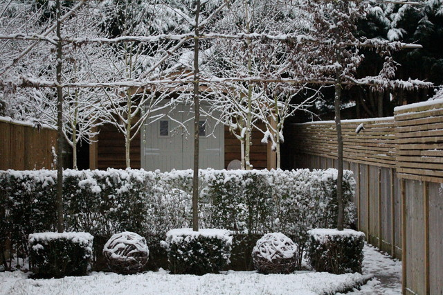 These Peaceful Gardens Show the Beauty in Winter Bareness