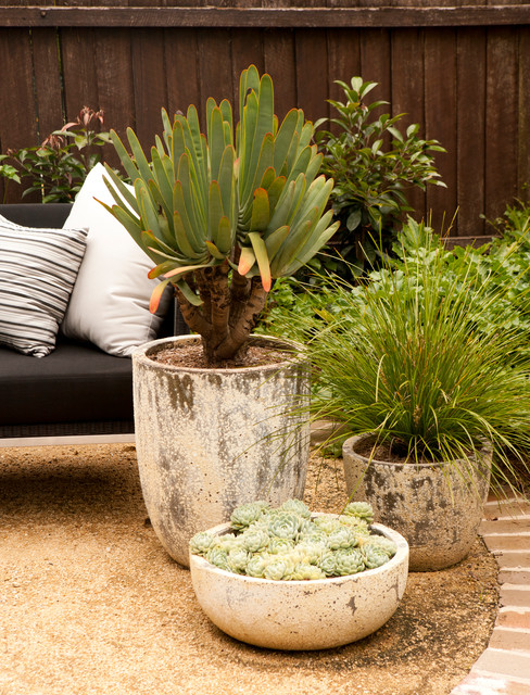 Landscape Garden Epping : Epping family entertainer potted succulents