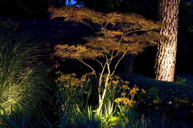 Exterior & Garden Lighting traditional-landscape