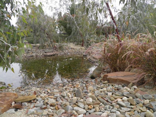 Landscaped Pond contemporary-landscape