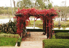 All You Need to Know About Adding a Garden Arbour