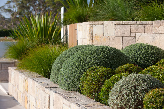 Mosman landscape modern landscape other metro by for Home garden design houzz