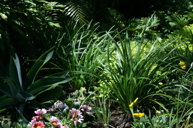 This is an example of a small eclectic front yard partial sun garden in Brisbane with a garden path.