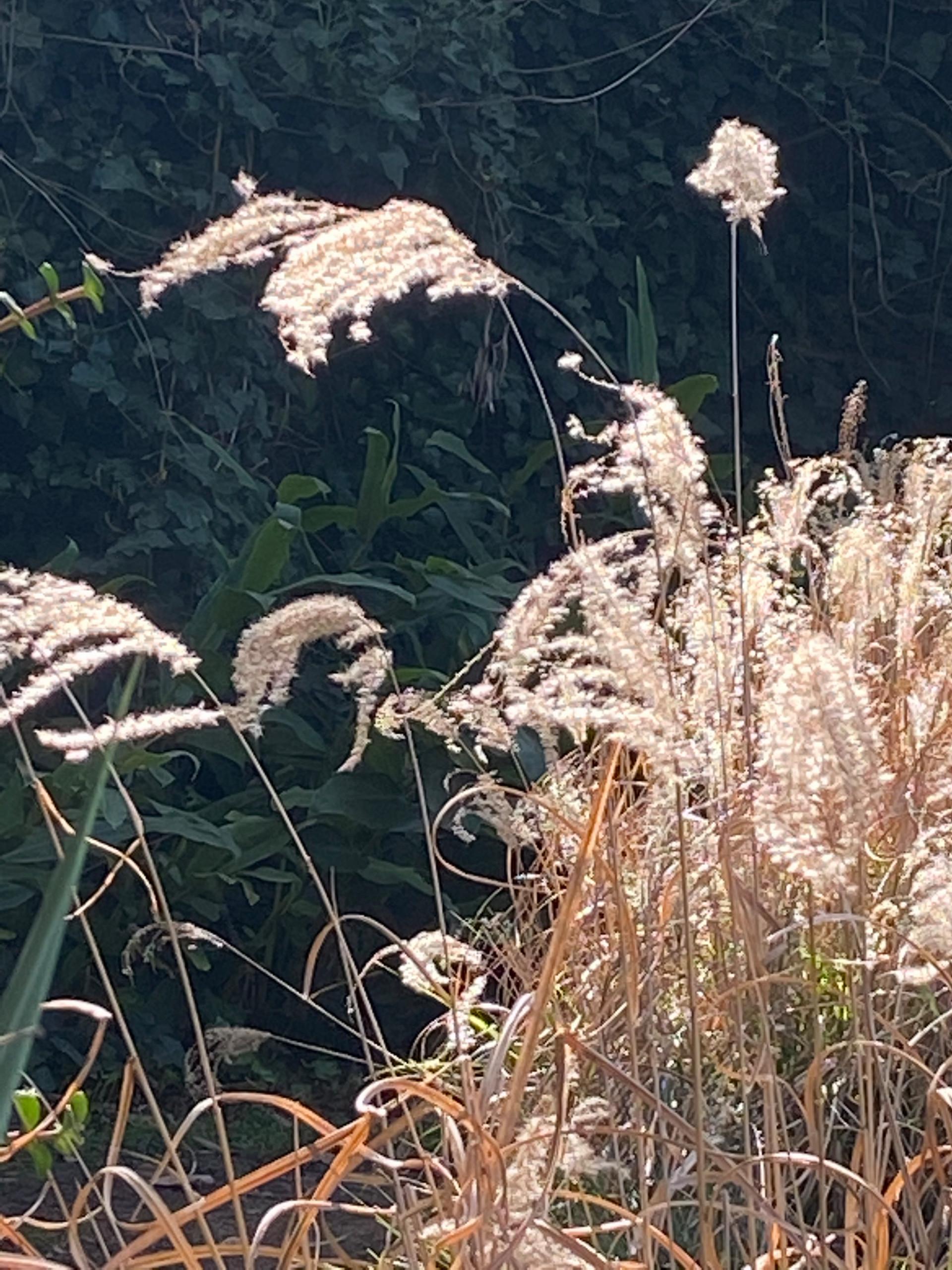 Planting Design - Ornamental Grasses