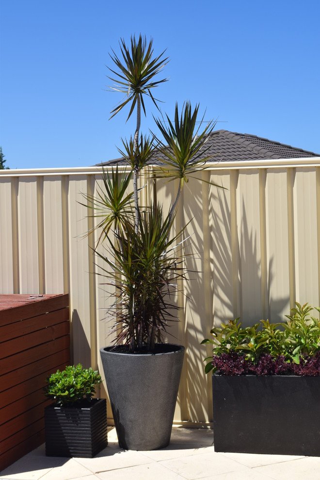 Potted Swimming Pool Planting/Fence Screening ...