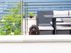 How to Make Your Small Urban Garden Dog-friendly
