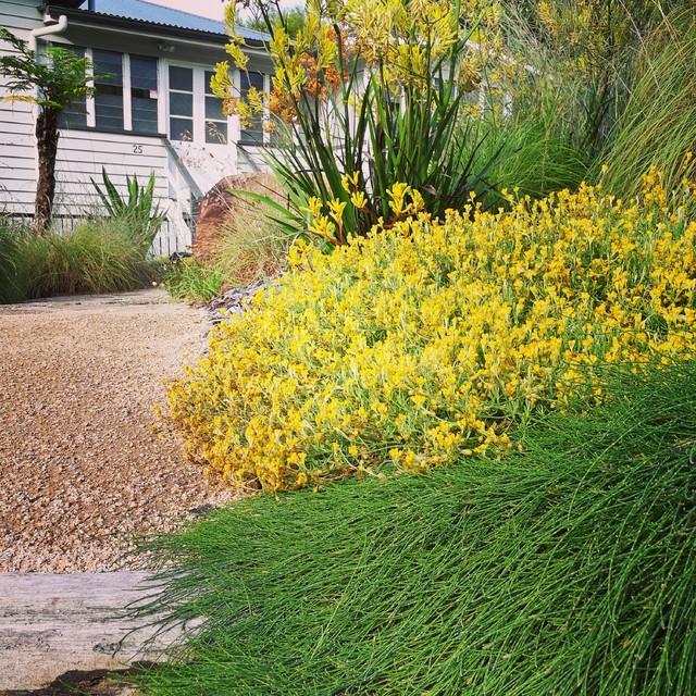 Residential Native Garden - Rustic - Garden - Sunshine ...