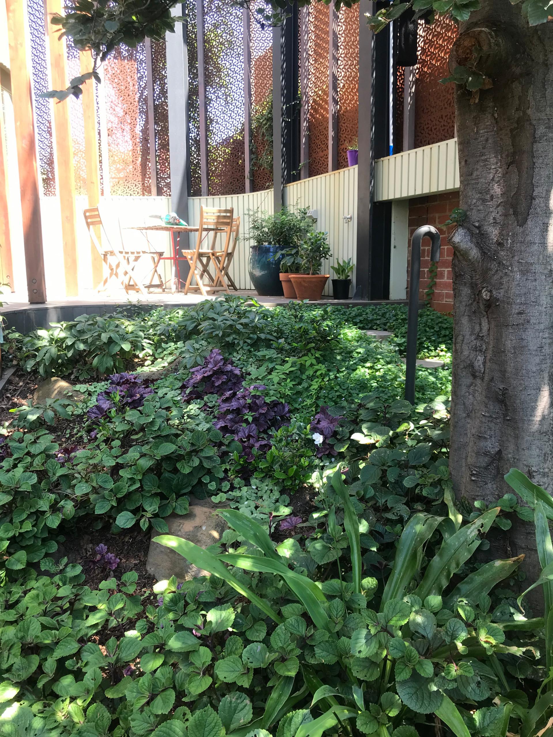 Scarborough Back Garden in Clifton Hill