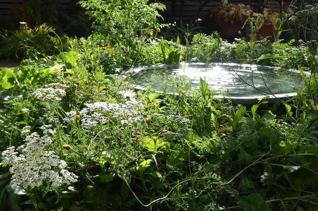Small town garden no lawn