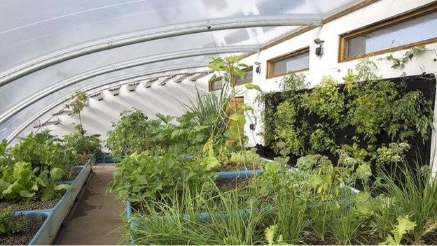Solar Aquaponic Greenhouse green wall at Humble by Nature, Wye Valley