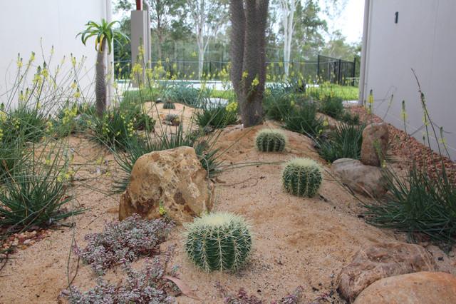 Succulent gardens Beach Style Landscape Brisbane