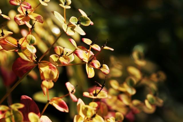 Sunlight In the Garden contemporary-landscape