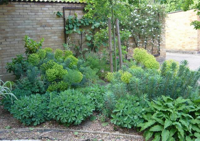 The drought tolerant garden Contemporary Landscape