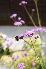 Udendørs: Hvad ved du om humlebier, og hvorfor er de så vigtige?