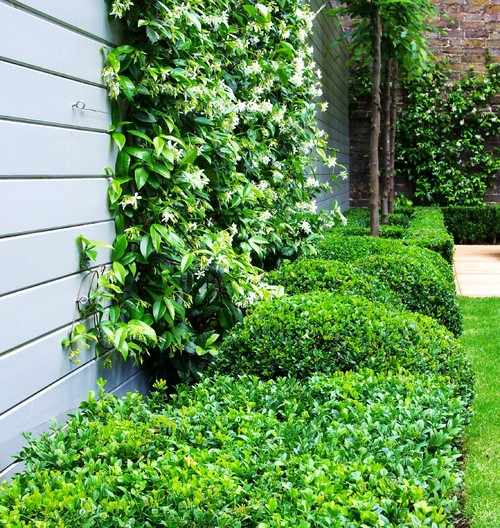 The Top 10 Plants For A Small Courtyard Garden Houzz