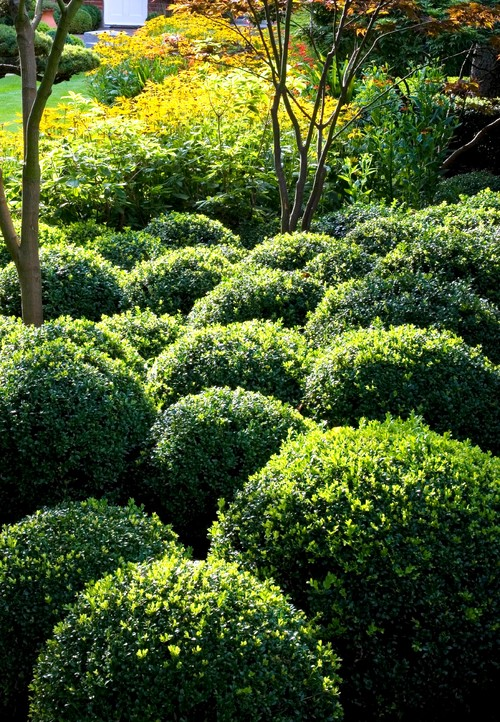 12 Diffe Ways To Use Boxwoods In The Landscape
