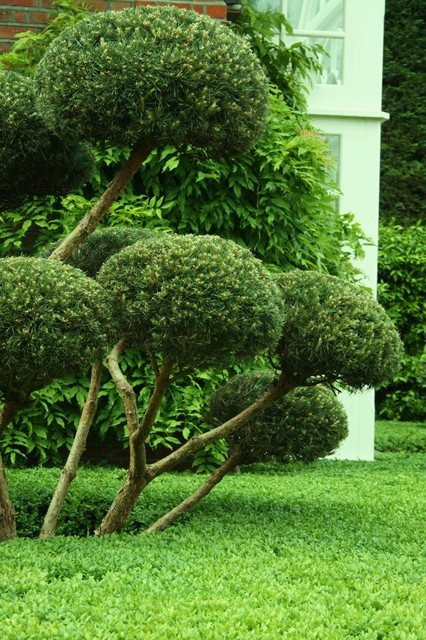 Topiary clipped planting in the garden for Topiary garden designs