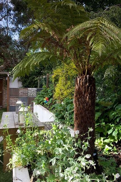 Tree Fern In Raised Beds Contemporary Garden London