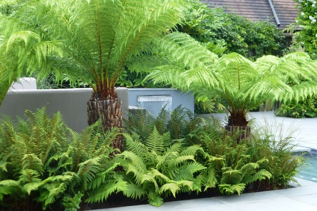 tropical garden in northwood contemporary garden london by rh houzz co uk  contemporary tropical garden design