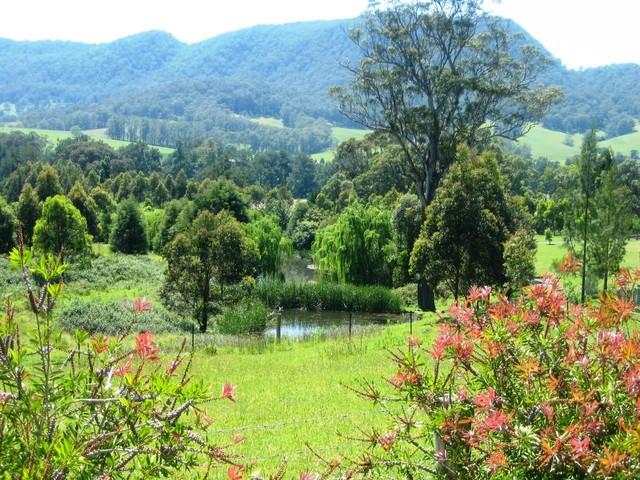 Turtle Ridge Lifestyle Property &  Revegetation traditional-landscape