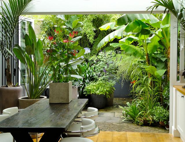 urban tropical tropical garden
