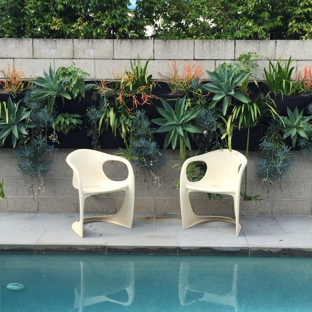 Inspiration for a mid-sized midcentury backyard formal garden in Brisbane.