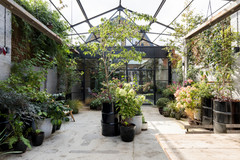 How to Grow Healthy Trees in Containers