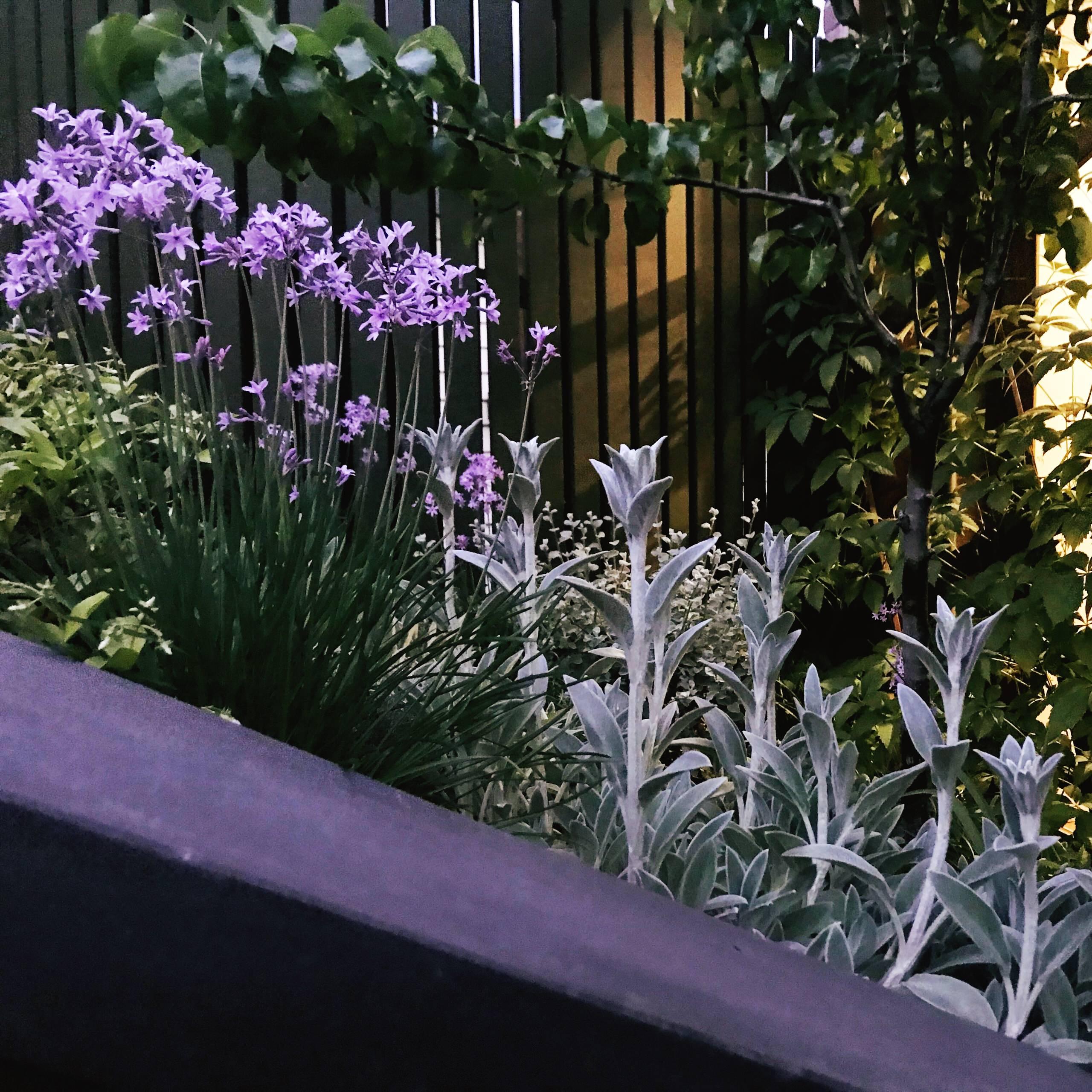 'Welkin', Colourful Rooftop Terrace & Garden in Clifton Hill