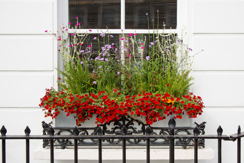 Window boxes and planters in the city
