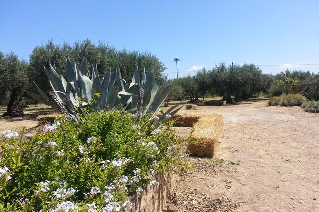 Casa in campagna e progetto di paesaggio a balestrate - Progetto giardino mediterraneo ...