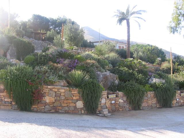 Foto con piante di rosmarino strisciante - Piccole aiuole da giardino ...