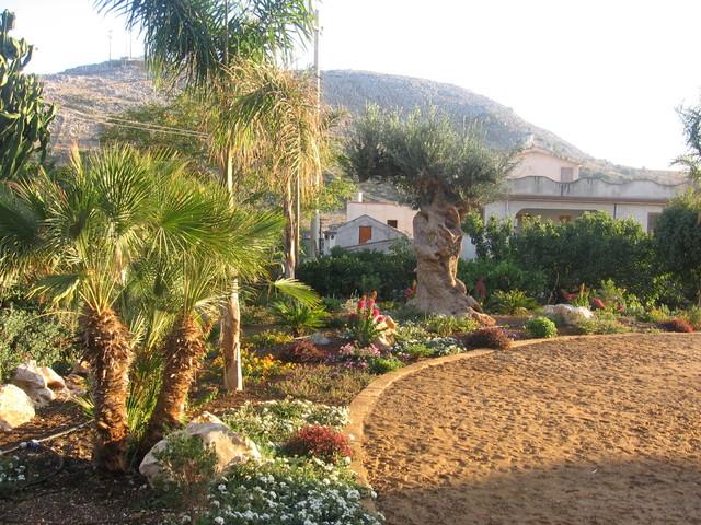 Foto giardino con ulivo secolare for Foto aiuole giardino