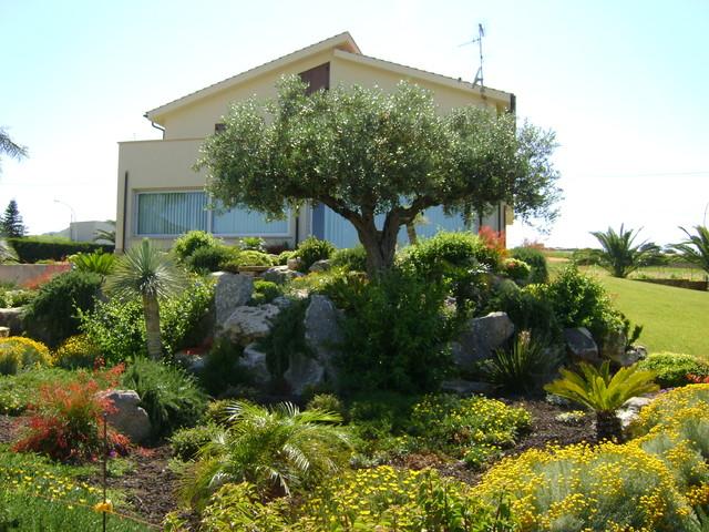 Foto terrazzamenti con ulivo - Terrazzamenti giardino ...