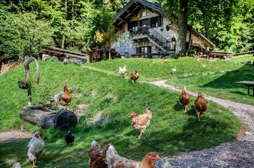 Hobby farm dreams for Hobby farm plans