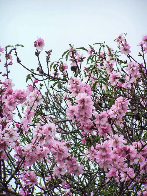 Nomi Di Fiori Rosa.12 Alberi Sui Toni Del Fucsia Che Fanno Risplendere Il Giardino