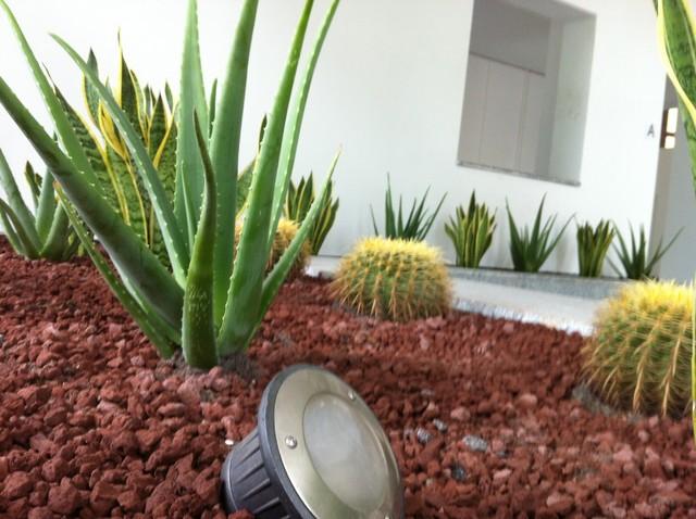 Piante grasse piante grasse e shopper with piante grasse - Le piante grasse si possono tenere in casa ...