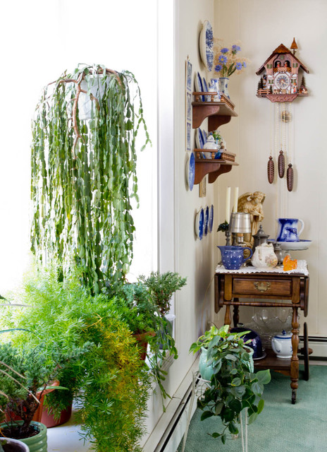 Dining room plants - Traditional - Hallway & Landing - New York ...