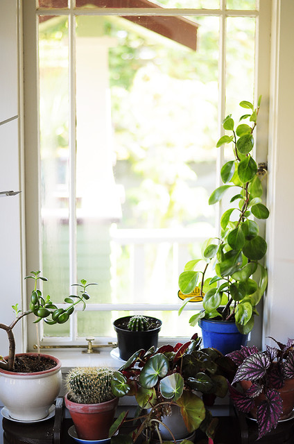 Plants in the Sun Room hall