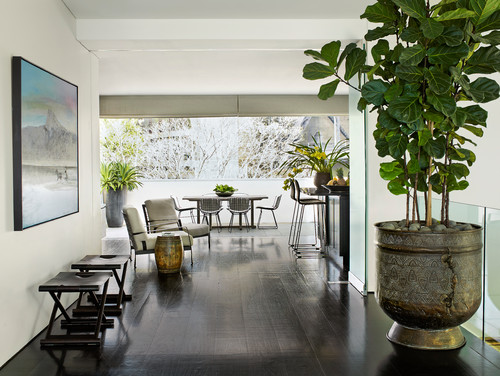Huge houseplant makes a statement