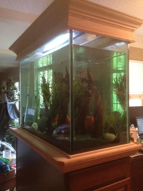 Oak Trim Work, Fish Tank   Tropical   Home Office U0026 Library .